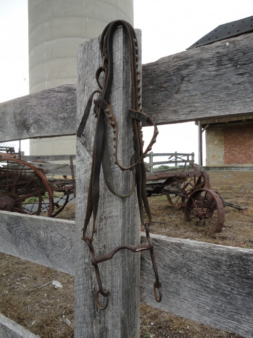 Image of the pony bridle that hung in my great-grandfather's barn for decades