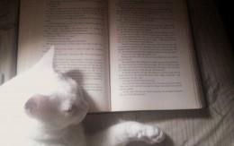 Prince Fredward fell asleep on my book. Silly cat!