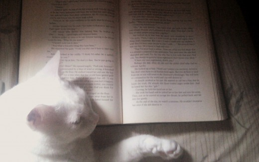 Prince Fredward fell asleep on my book. Silly cat!