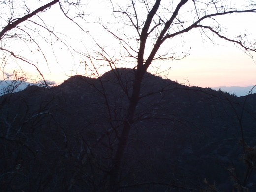 Another picture of an oak tree at sunset.