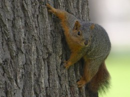 Squirrels are safer in trees than on the road.