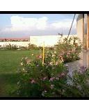 Our Roof Garden/Terrace Garden