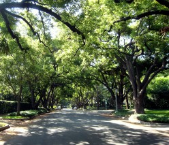 The Importance of Street Trees