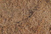 Does this look like spots at the edge of your lawn? Save money by repairing places like this yourself.