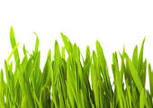 You can have beautiful grass like this once again--even in a once-barren area if you follow my advice and do it yourself. And save money too.