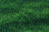 A pretty lawn lawn like this is worth all the manual labor that's put into keeping bare areas repaired.