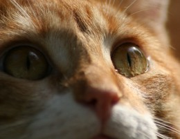 Yellow Guy rescued...RIP Leukemia kitty