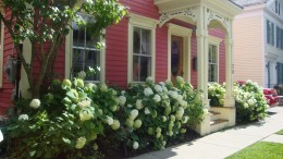The hydrangeas by themselves look incredible around this home.