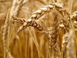 A Brief History On Grains and their benefits