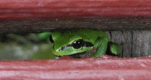 hiding in the decking