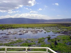 The Ngorongoro Crater with its steep walls of 610 metres has become a natural enclosure for a very wide variety of wildlife, including most of the species found in East Africa, except the giraffe. Aside from herds of zebra, gazelle and wildebeest, th