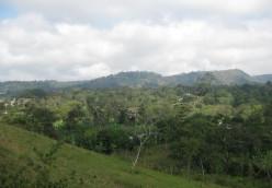 Marangu Forest