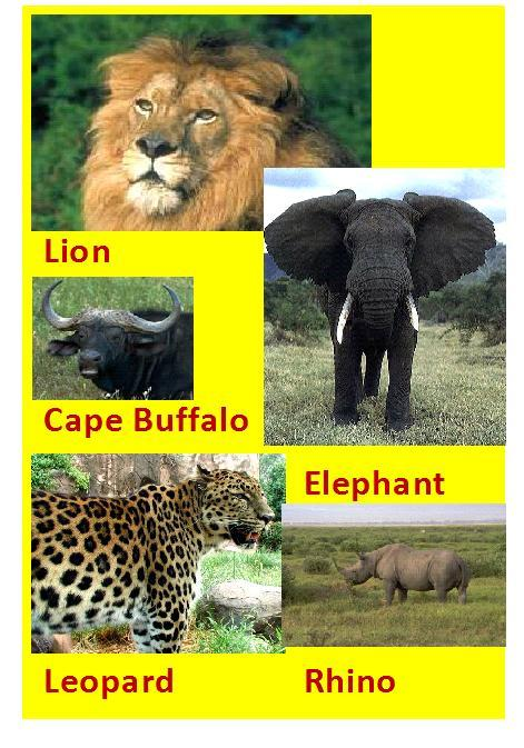 The Big Five - The term was coined by white hunters and refers to the five most difficult animal in Africa which are difficult to hunt and involve high degree of danger.