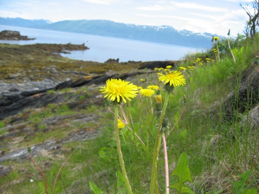 The view of the low tide from a dandelion's perspective.