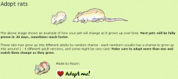 Adopting a rat is free and easy.