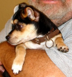 Puppy Training -- Recognize Your Puppy's Temperament and Intelligence