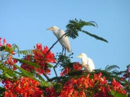 . . . up in the Flamboyant tree
