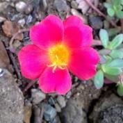 scianna profile image