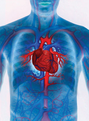 the anatomy and physiology of the heart