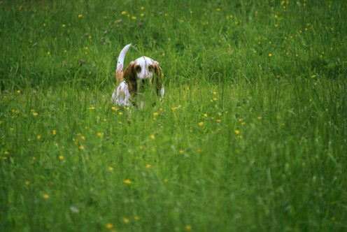 Ruby in the long grass