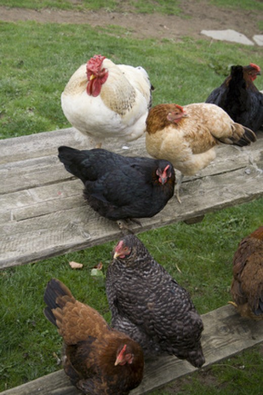 Chickens will surely keep the slugs at bay, but not everyone has the desire to raise chickens.