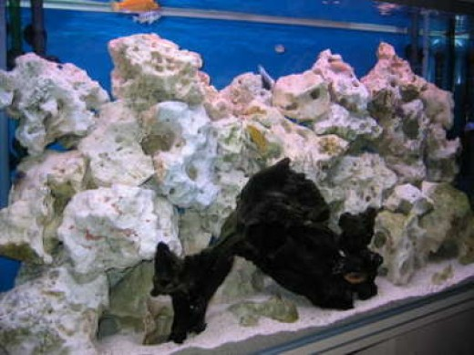 Lake malawi cichlids 4 aquarium decoration substrate for African cichlid rock decoration