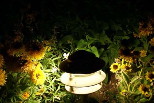 Marigolds by light