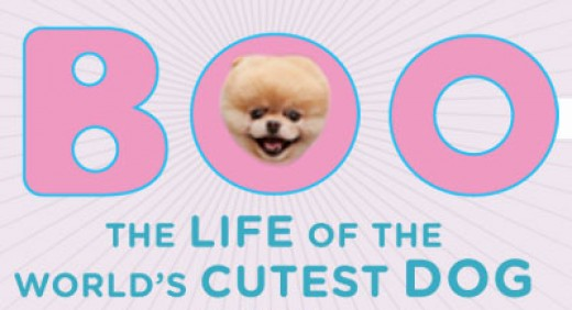The Life of the Cutest Dog