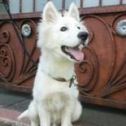 husky101 profile image