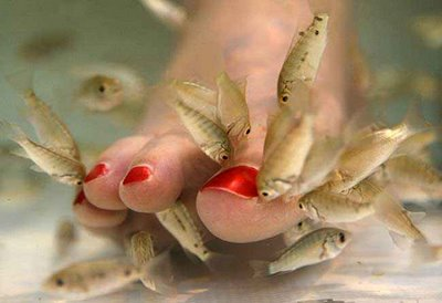 Garra Rufa Fish Pedicure