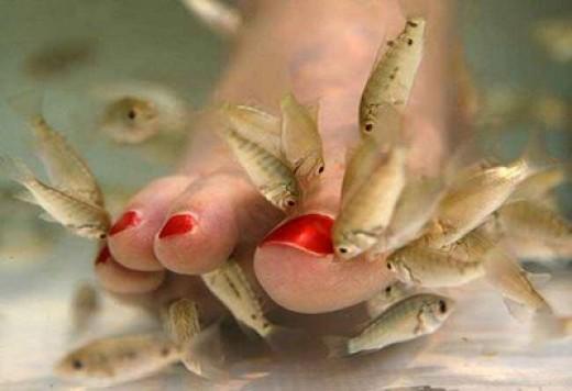 Garra Rufa Fish Pedicure