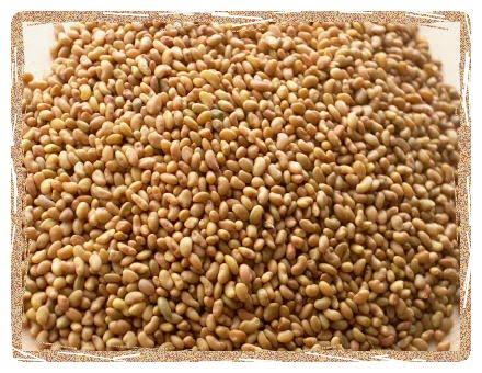 Alfalfa Seed extract