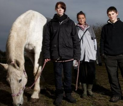 Can horse therapy help troubled teens? A 17-year-old girl, not pictured, accused of robbing pupils at knifepoint  was sent on a three-month riding course