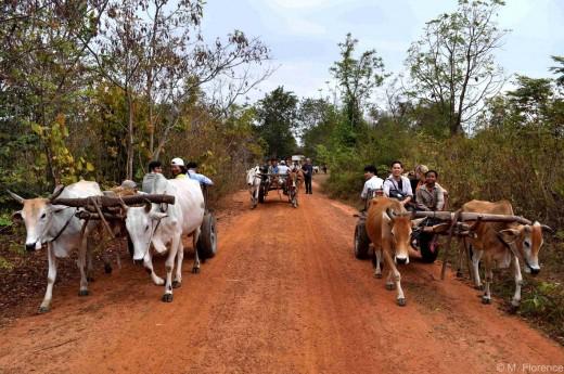 Ox-rides at Chambok