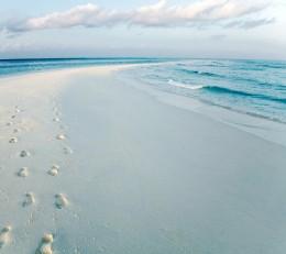 the beach of life...