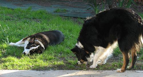 http://flickr.com/photos/dogsbylori/2423853693/
