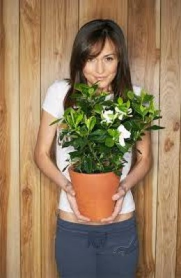 House plants that are shown love and care will grow and flourish!