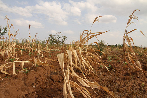 Crops have been decimated throughout much of the state, leaving farmers without hope, and many wondering how they will make it to next year.
