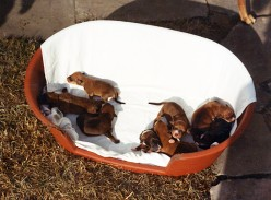 The puppies, 3 days old