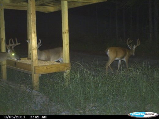Use deer feeders to attract wildlife.