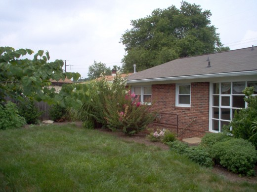 The back yard - July 2006.