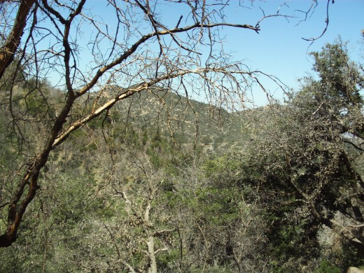 The branches of the oak tree create a veil for the mountains in the distance.