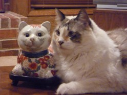 Christmas Ornaments for Cat Lovers
