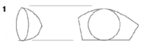 Basic shapes of the eyes