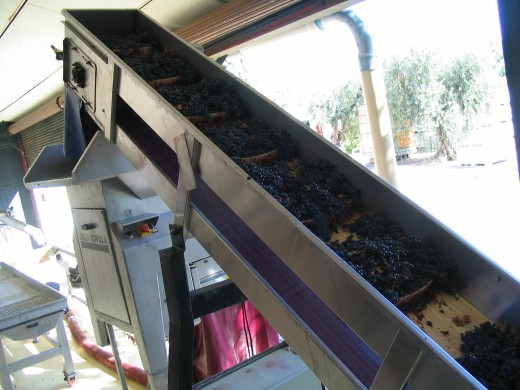 Making wine from grapes