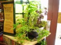Healthy Herbs/Growing Greens at Home