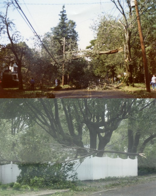 two photos of branches on wires after Gloria (top) and Irene (bottom).