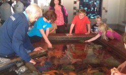 Children can get hands on at this tidal pool at the Oregon Coast Aquarium