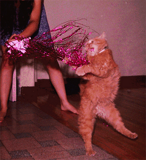 Fairy god cat says you don't have to go to the ball if you don't want to.