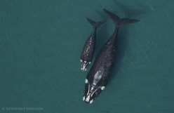 What Whales Look Like From the Sky: 11 Incredible Aerial Photos